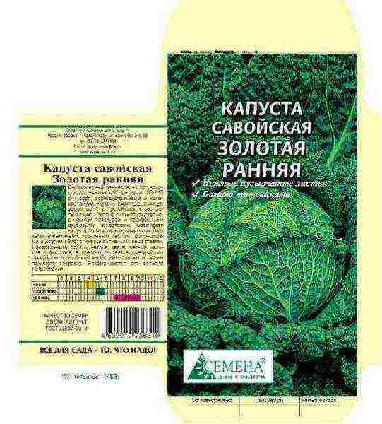 Всё о выращивание савойской капусты