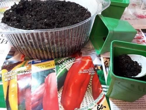 Как правильно вырастить хорошую рассаду перца: видео, фото?