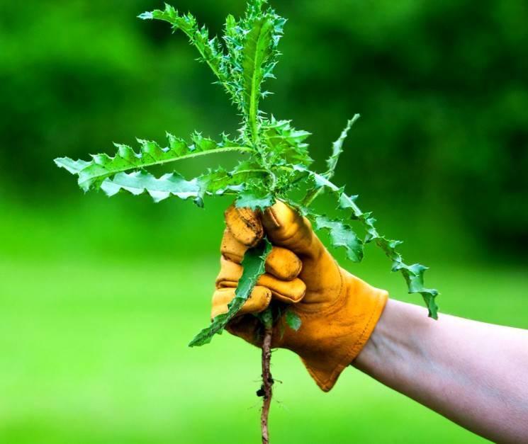 Как избавиться от травы во дворе и на огороде народными средствами