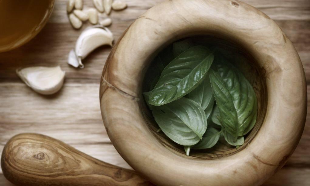 Польза и вред базилика для здоровья человека