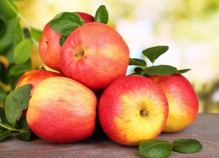 Яблоня «серебряное копытце»: описание сорта, посадка и уход + фото и отзывы