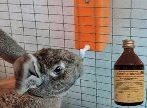 Соликокс для кроликов: инструкция по применению