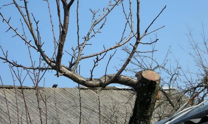 Подготовка сада к зиме – уход за деревьями и кустарниками