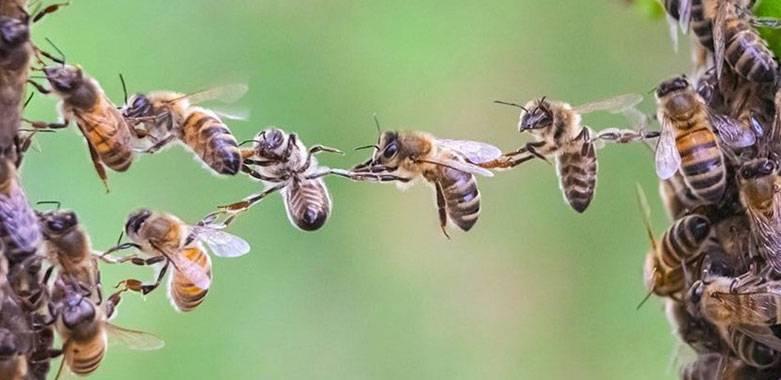 Разведение пчел для начинающих: своя пасека с нуля