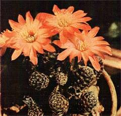 Вредители комнатных растений с фото и названиями