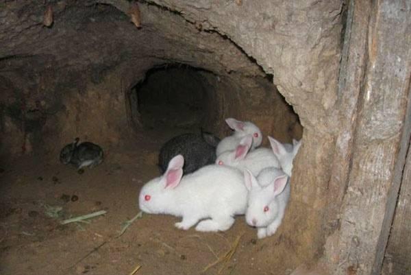 Бизнес на разведении кроликов