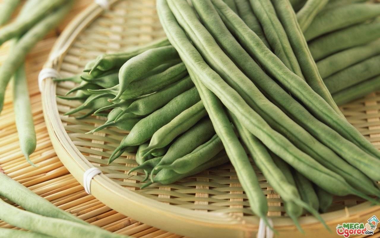 Стручковая фасоль: лучшие сорта и советы по выращиванию