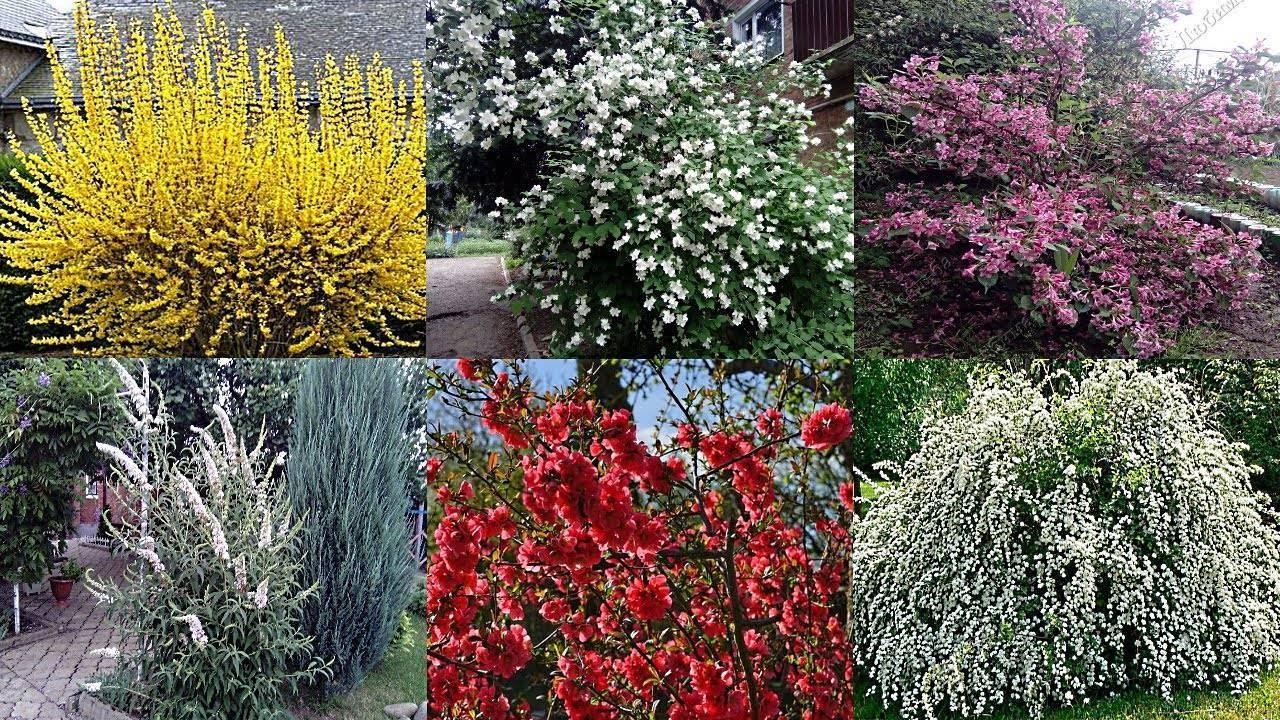Из сорняка превращаем пестролистную сныть в украшение нашей усадьбы!