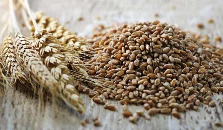 Питательные свойства, польза и вред пшеничной каши