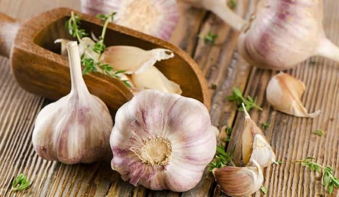 Рокамболь: агротехника выращивания и размножения чеснока-гиганта