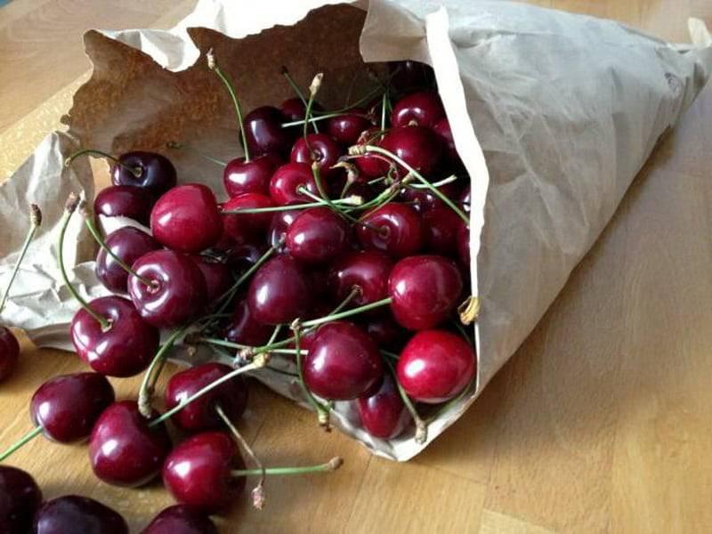 Сорт шоколадница — сладкая королева вишен, особенности выращивания и ухода