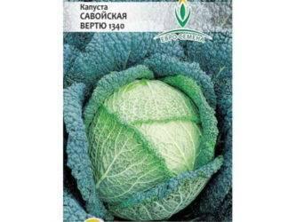 Савойская капуста – особенности выращивания и ухода за нею