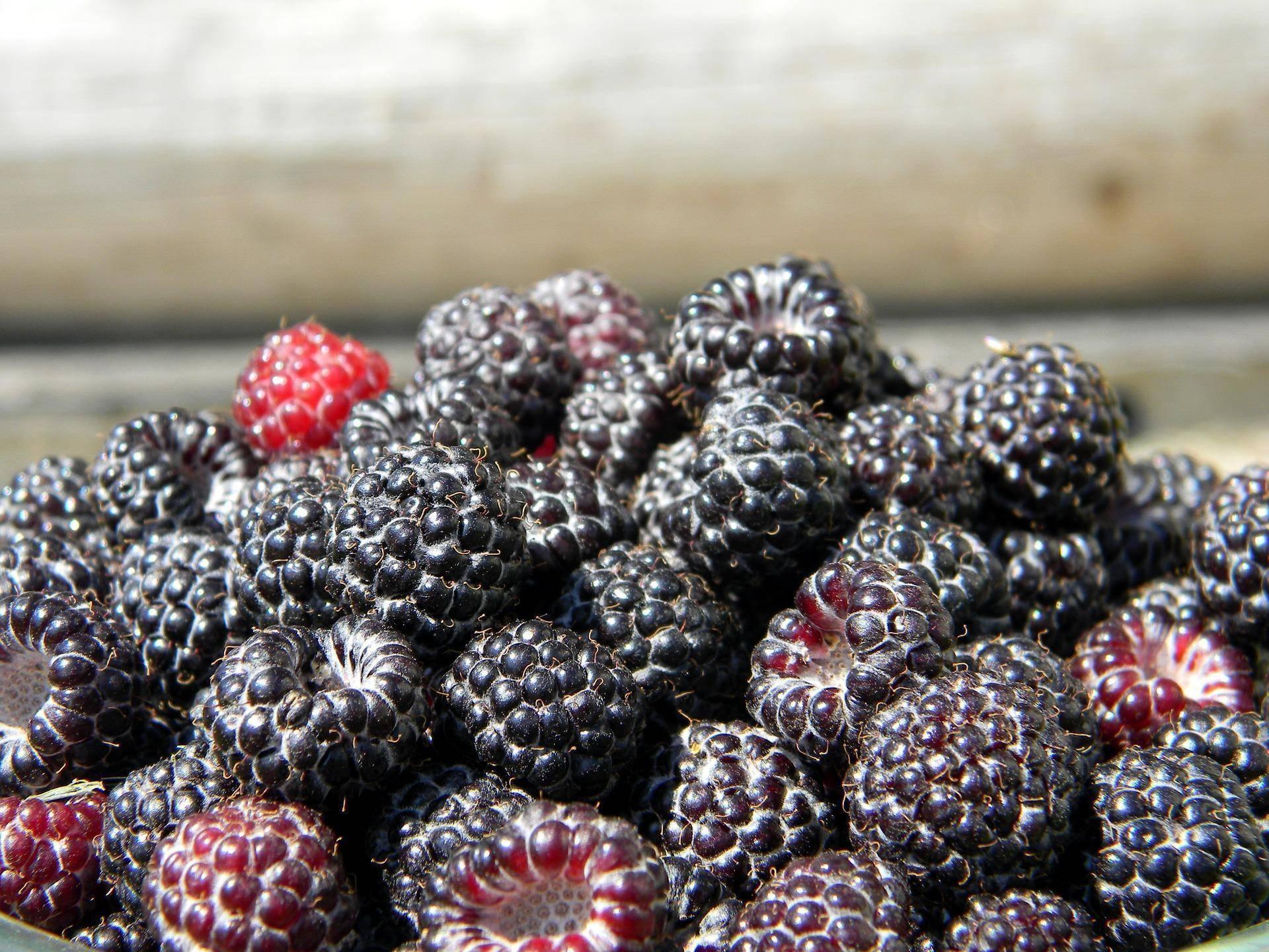 Описание, польза и вред малины для здоровья человека