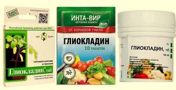 Применение биологического фунгицида «глиокладин»