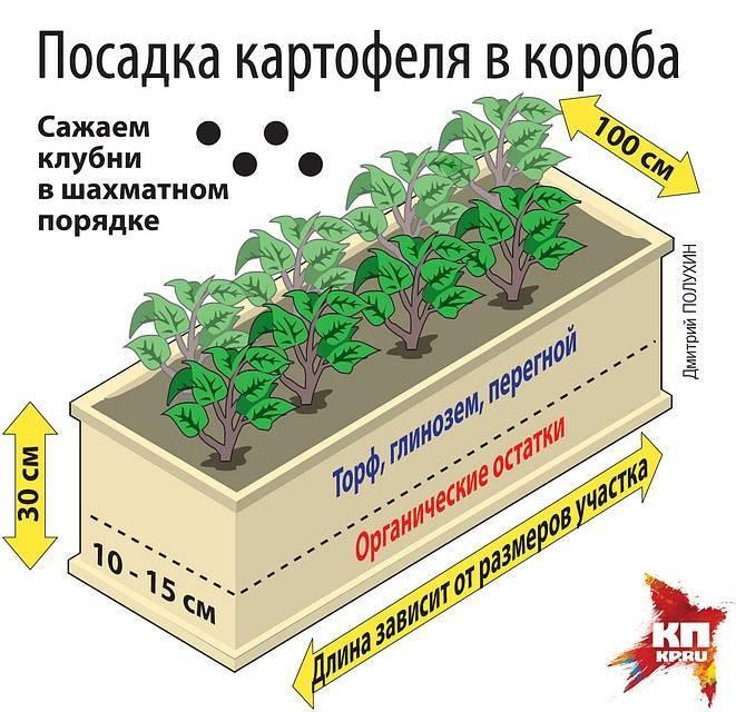 Агротехника и технология выращивания картофеля