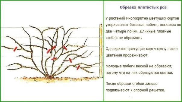 Как осенью подготовить цветники к зиме