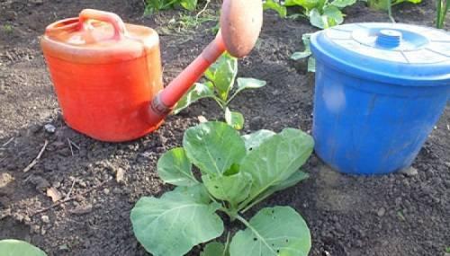 Травяной настой — дешевое удобрение для сада