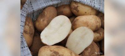 Удобрение для картофеля – какое лучше применять перед посадкой весной