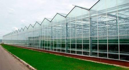 Теплицы для выращивания овощей круглый год: варианты обустройства