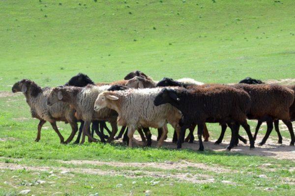 Какие животные выращивают на ферме и как за ними ухаживать