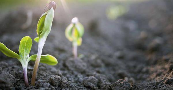 Что такое период вегетации растений и как его определить