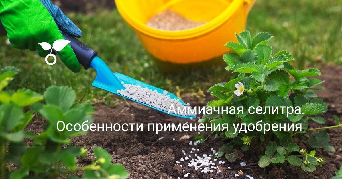 Удобрение аммиачная селитра: грамотное применение в сельском хозяйстве