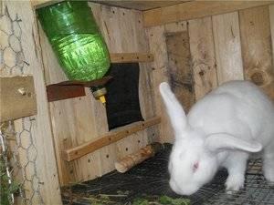 Поилки и кормушки для кроликов своими руками