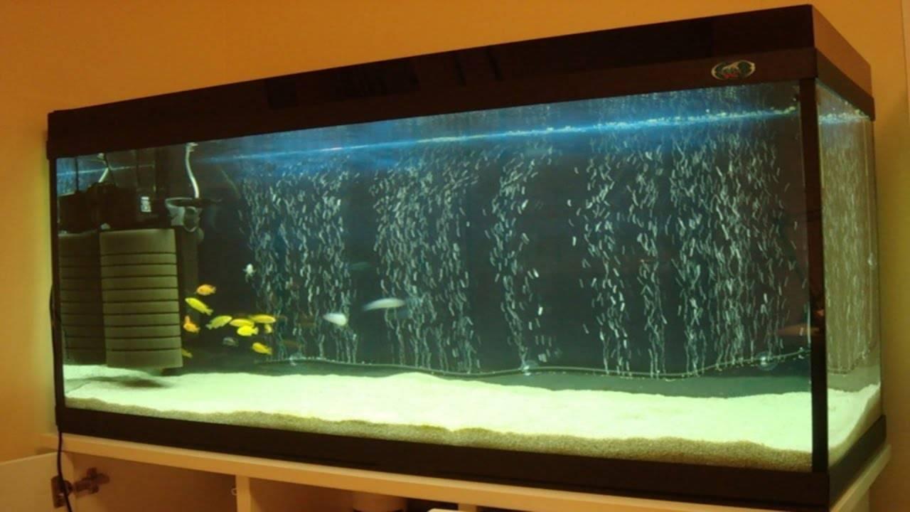 Что такое аэрация воды в аквариуме и зачем она нужна?