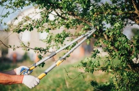 30 дел, которые нужно сделать в июле в саду, огороде и цветнике