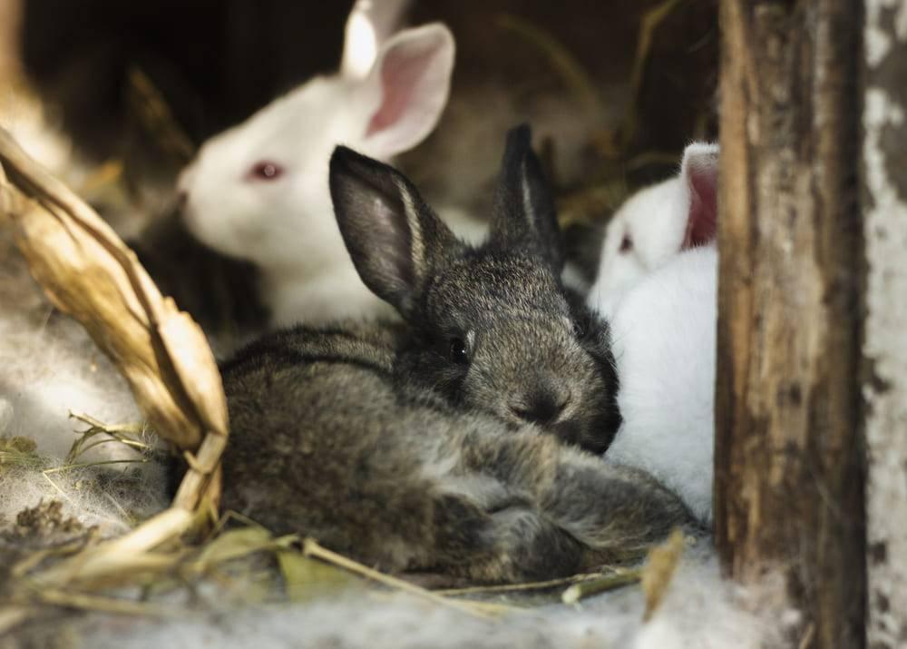 Шедовое содержание кроликов: фото, чертежи, видео