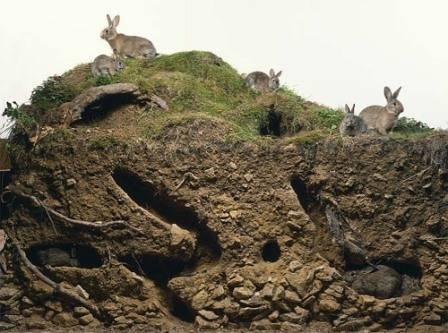 Кролики в яме: технология выращивания под землей