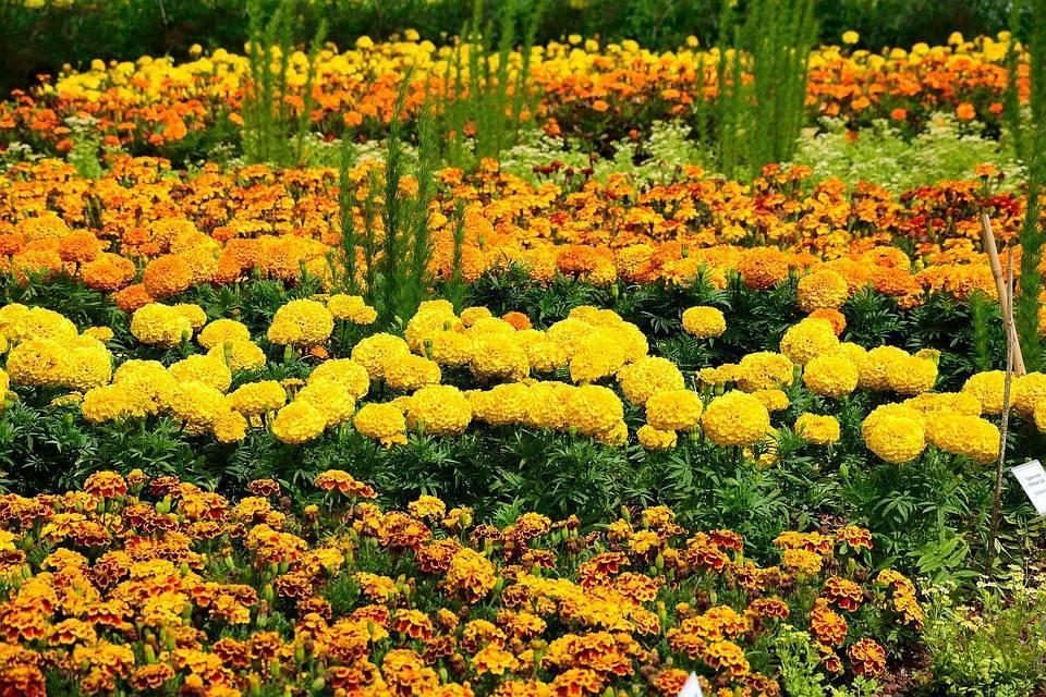 Осенняя пересадка садовых цветов сроки. пересадка многолетних цветов на клумбах приусадебных участков