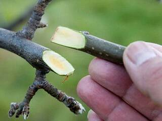 Три способа размножить декоративные растения весной