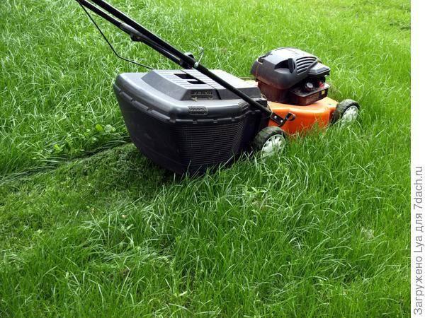 Газон своими руками: какую газонную траву купить, как и когда сеять