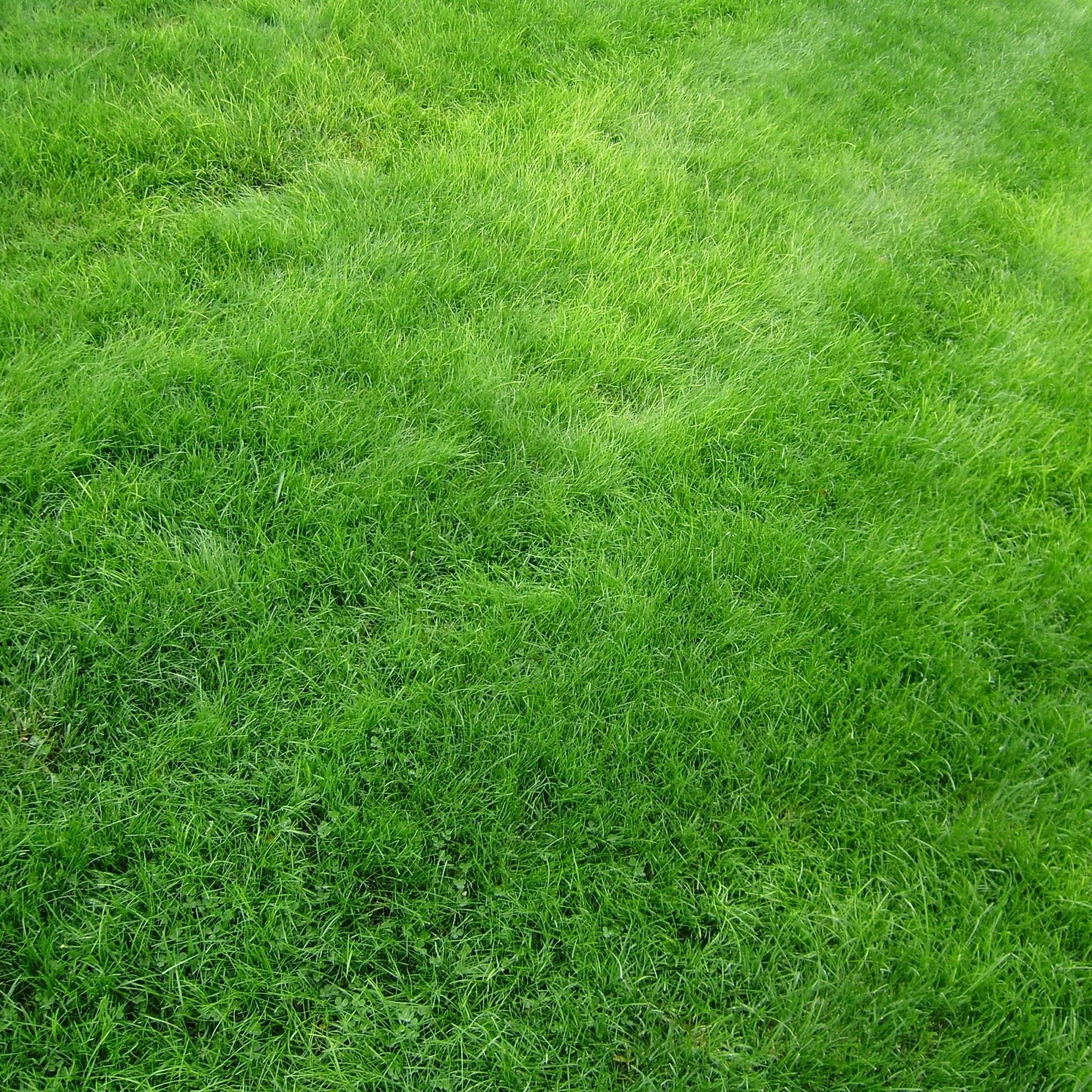 Садовые хитрости: уход за газоном весной