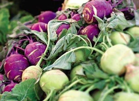 Все о посадке, выращивании и уходе за капустой кольраби