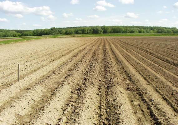 Внесение удобрений под картофель на песчаных почвах, видео