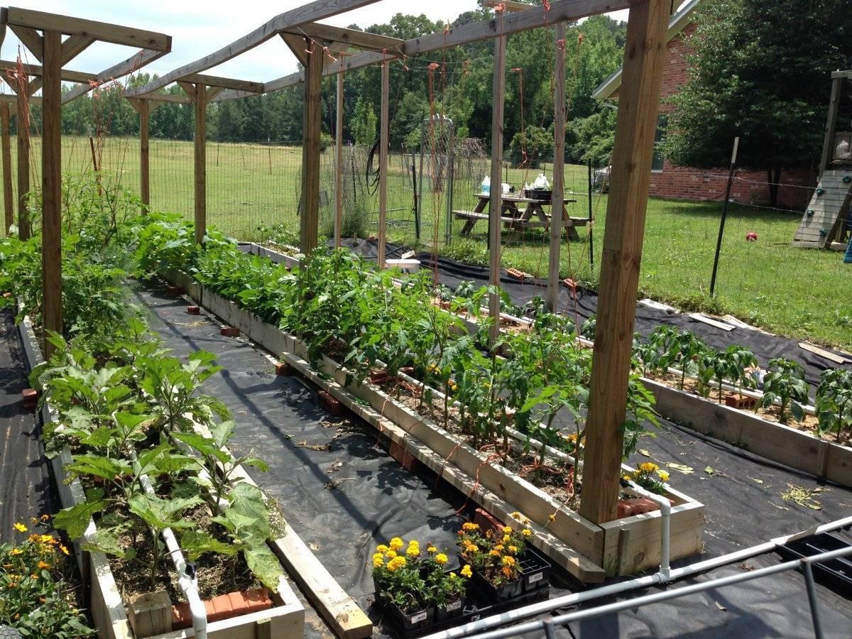 Огород по митлайдеру — с чего начать, видео