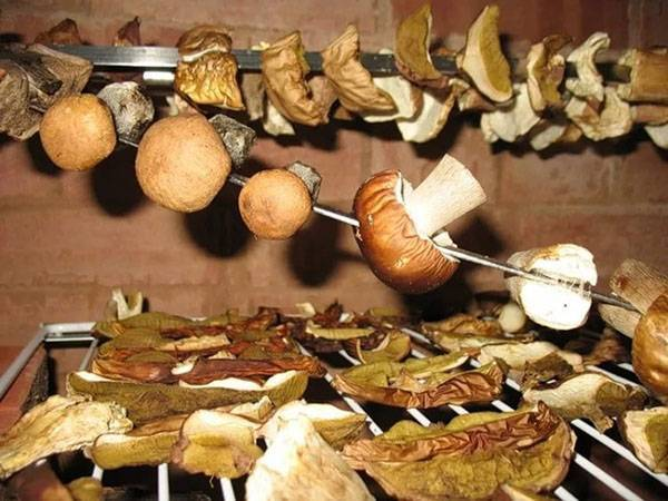 Сколько времени нужно замачивать сушёные грибы