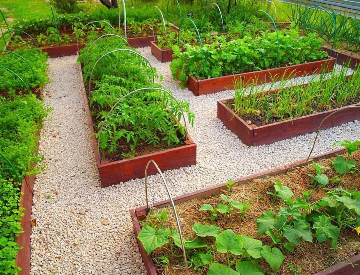 Совместимость растений на огороде: какие культуры можно сажать рядом и несовместимое соседство