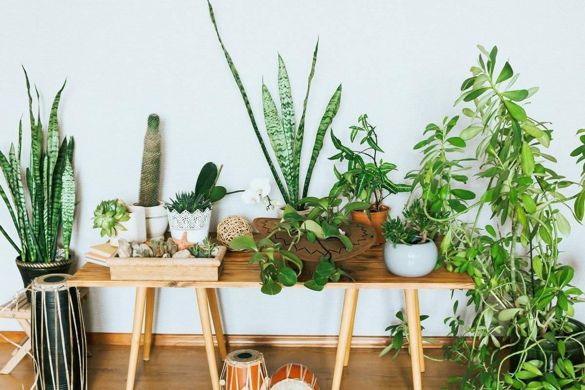Как и какие выбрать комнатные цветы для дома