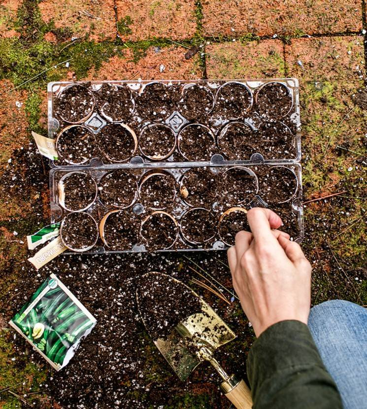 13 необычных способов выращивания рассады. какой выберете вы?