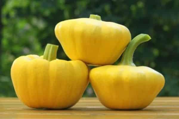 Патиссоны: выращивание, уход, популярные сорта