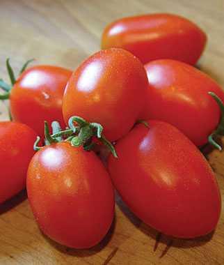 Лучшие салатные сорта помидор