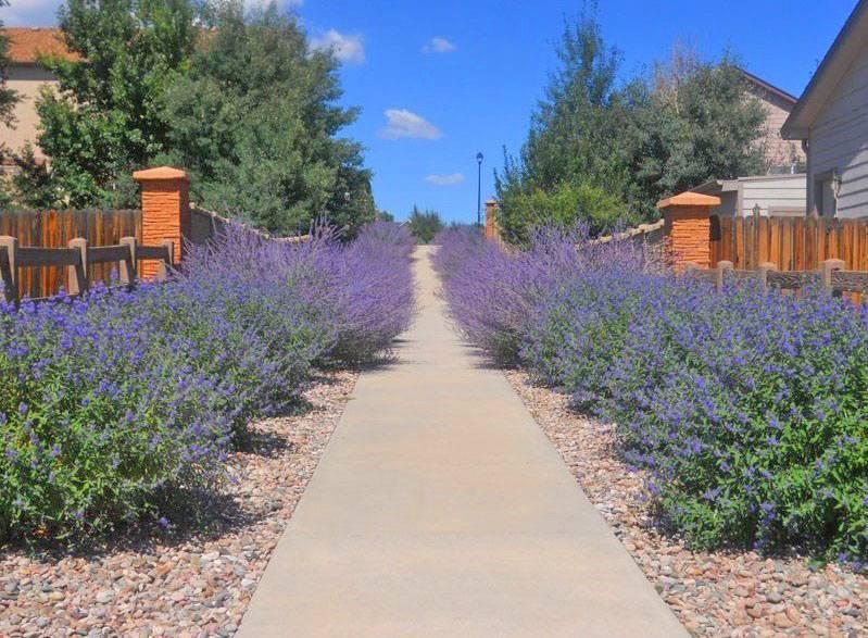 Как выбрать лучшие растения для рокария на даче: фото удачных компаньонов