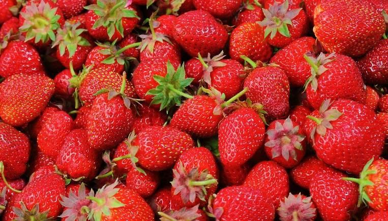 Правила ухода за клубникой с весны до осени для получения обильного урожая
