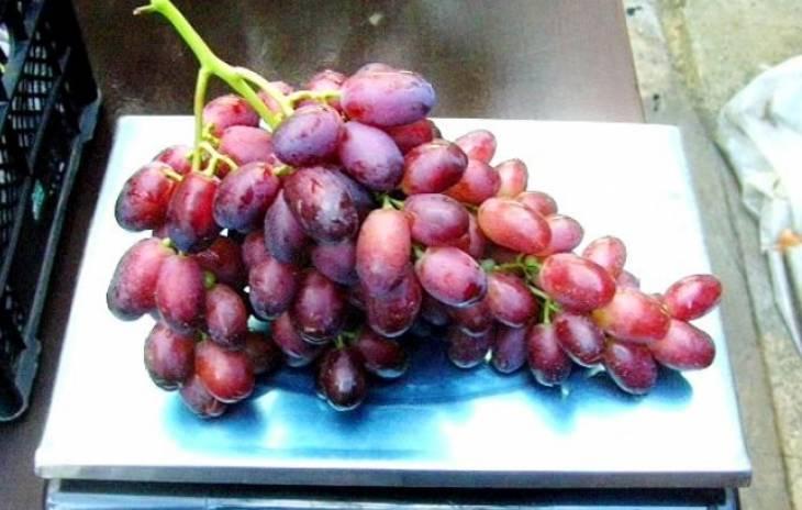 Виноград ризамат — сладкий гость из узбекистана! посадка, обрезка и формирование куста