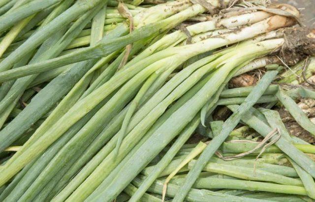 Как вырастить лук китайским способом на гребнях