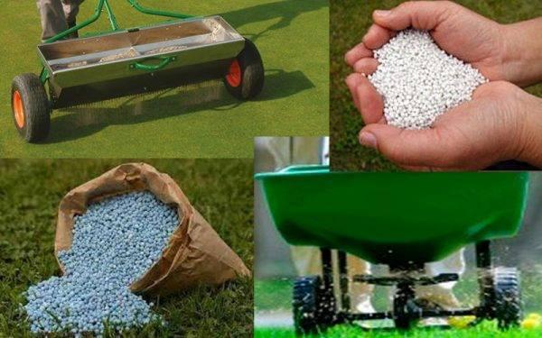 Удобряем газон весной: сроки, способы и обзор удобрений