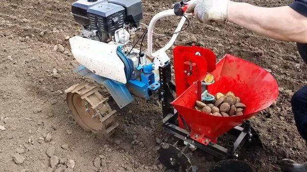 Как делается посадка картофеля мотоблоком под плуг и картофелесажалку